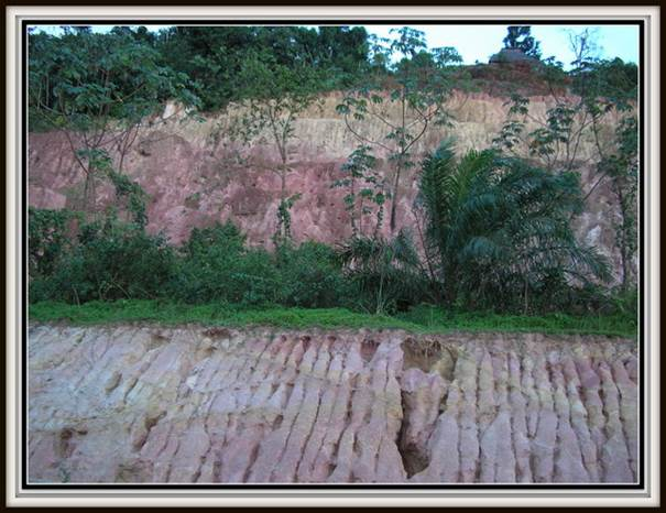 http://vidiyah.homespot.nl/site_images/561_tijgeraaien1aaa.jpg